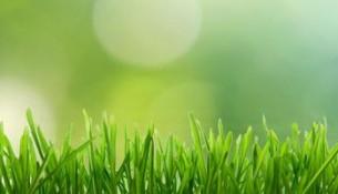 sanidad_ambiental
