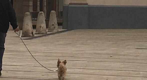perro_atado